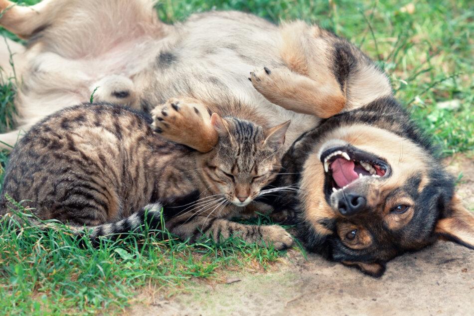 Tierheim drohte der Corona-Kollaps: Jetzt können Hunde, Katzen & Co. aufatmen!