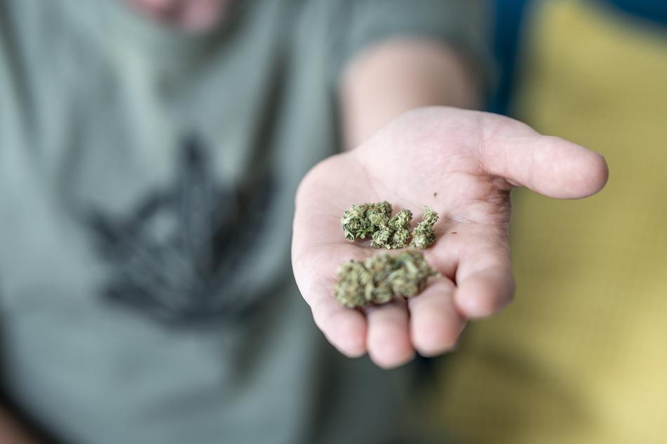 Das nicht berauschende CBD-Gras ist in Deutschland legal. Dasselbe wollen die Aktivisten für den psychoaktiven Bruder THC.