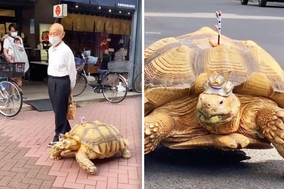 Riesige Schildkröte ist das Highlight auf den Straßen einer Millionen-Stadt