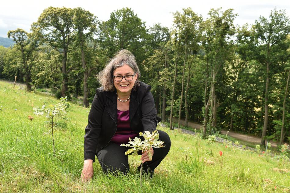 Aus den kleinen Bäumchen rund um Umweltbürgermeisterin Eva Jähnigen (54, Grüne) soll ein richtiger Wald werden und die Deponie bedecken.