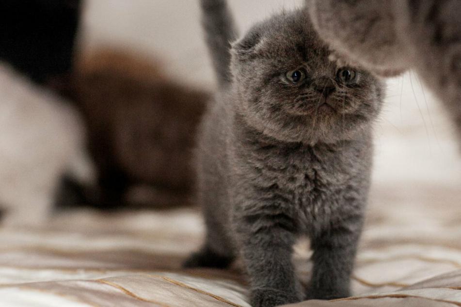 Ich oder die Katze! Die Forderung der Freundin des Mannes ist geradezu grausam.