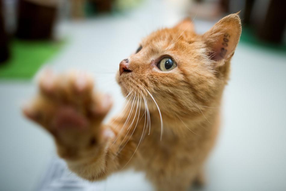 Mann in Bremen rettet blinde Katze vor giftigem Tier