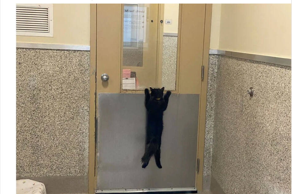 This poor little cat looks desperate for a new home.