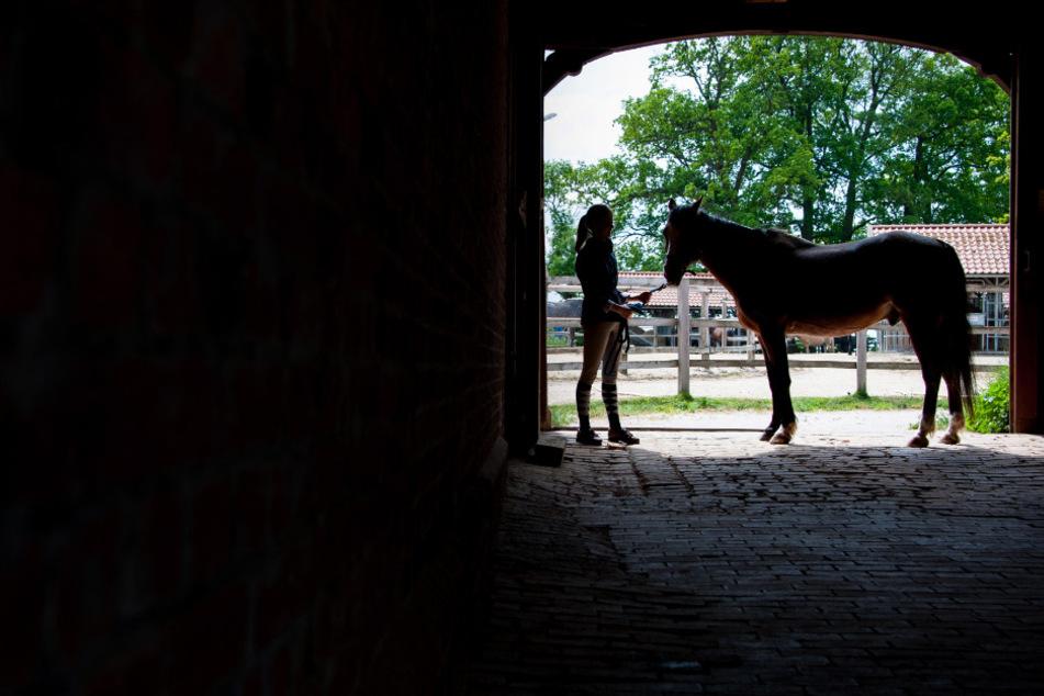 Eine junge Frau geht mit ihrem Pferd durch ein Tor auf einem Reiterhof.