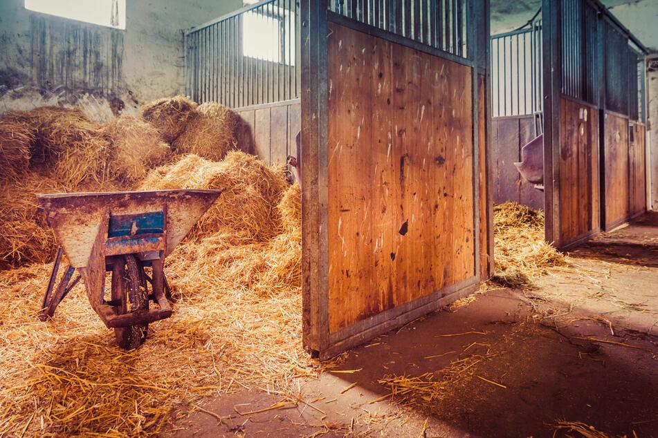 In einem österreichischen Reitstall ist eine Zehnjährige von einem Pferd totgetreten worden. (Symbolbild)