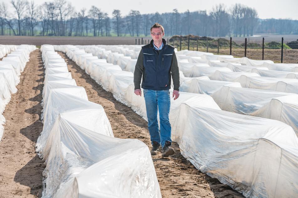 René Heidig schreitet ein Spargelfeld ab. In diesem Frühjahr gab es für sein Unternehmen schon böse Überraschungen: Stürme hatten Spargel-Zelte zerfetzt und fortgetragen.