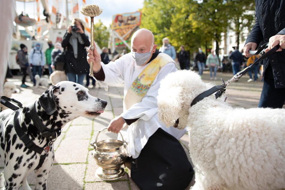 Diakon Carsten Lehmann segnet zwei Hunde mit einem Aspergill und Weihwasser.