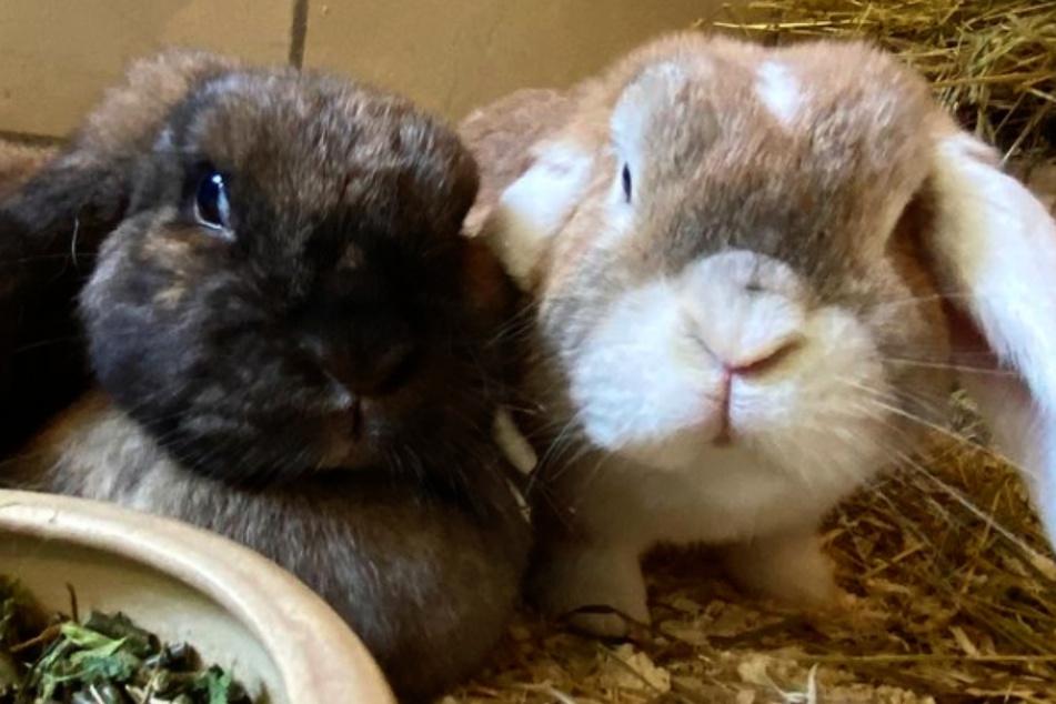 Daisy (l.) und Oskar haben sich im Tierheim Bergheim kennen- und lieben gelernt.