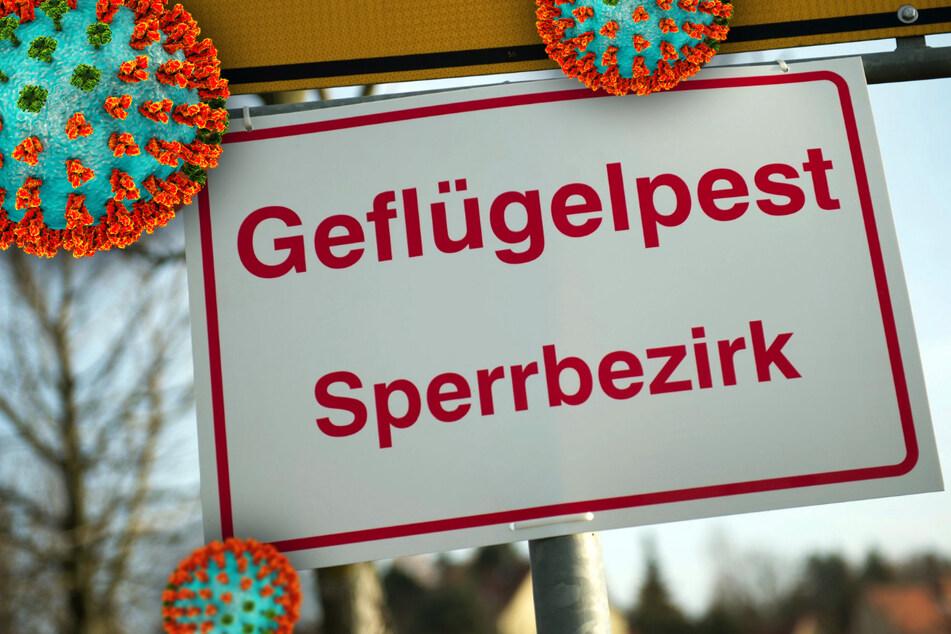 Geflügelpest-Ausbruch im Vogtland: Sperrgebiet wird eingerichtet!
