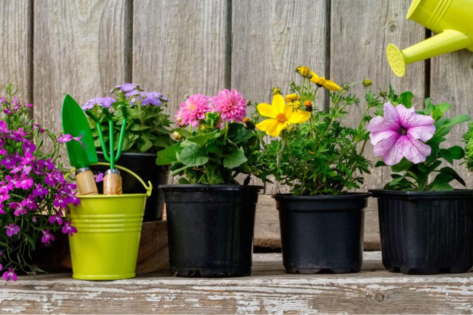 Pflanzen gießen im Urlaub: Drei Tipps, wie Blumen überleben