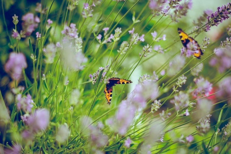 Für den Garten und Haushalt hält TAG24 jede Menge Tipps auf Lager (Foto: Unsplash/Emiel Molenaar)