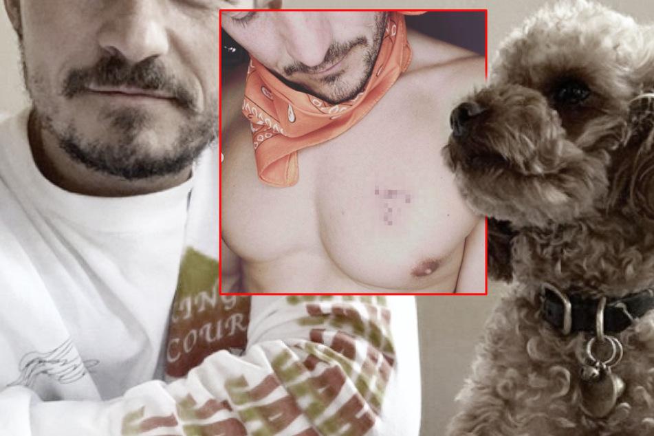 Hunde-Schock für Orlando Bloom: Star trauert um toten Vierbeiner mit diesem Tattoo!