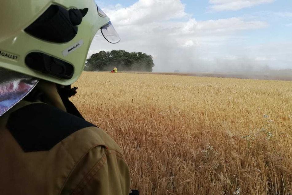 Insgesamt löschten sechs Feuerwehren das Feld ab.