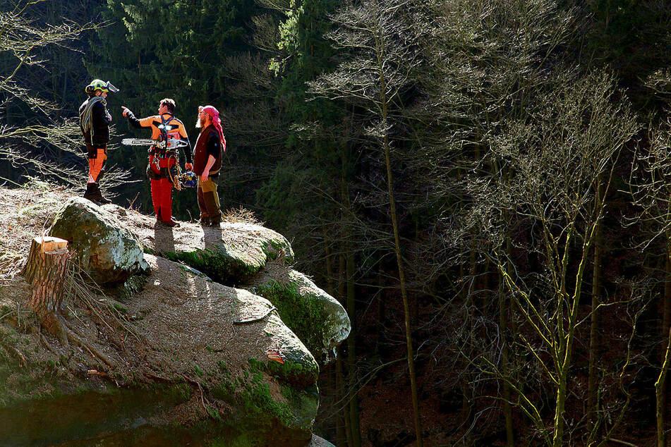 Männer am Abhang: Die Baumfäller besprechen die nächsten Arbeiten am Steilhang des Großsteins.
