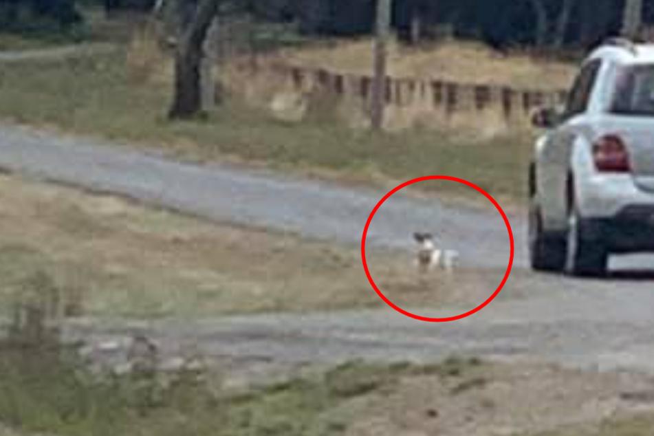 Frau sieht, wie ausgesetzter Hund Besitzern nachläuft: Doch jetzt steht sie vor einem Rätsel