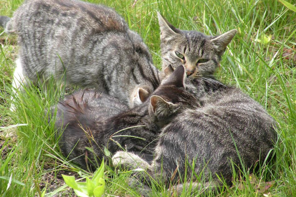 Vor 30 Jahren gab es schätzungsweise 20.000 Streunerkatzen in Leipzig und sie pflanzten sich immer weiter fort.