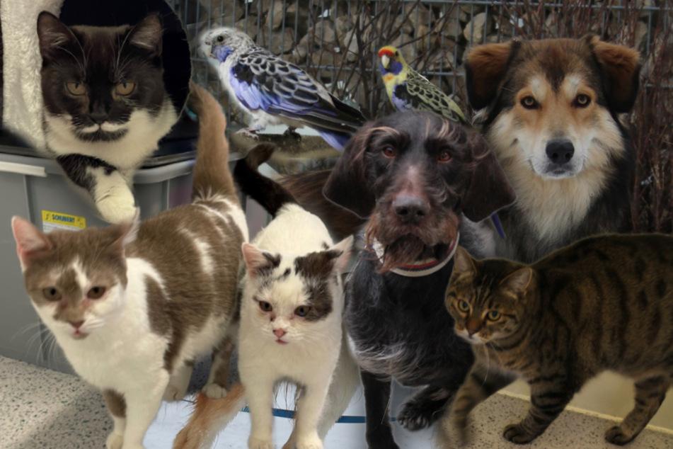 8 besondere Haustiere: Diese Hunde und Katzen suchen ein neues Zuhause