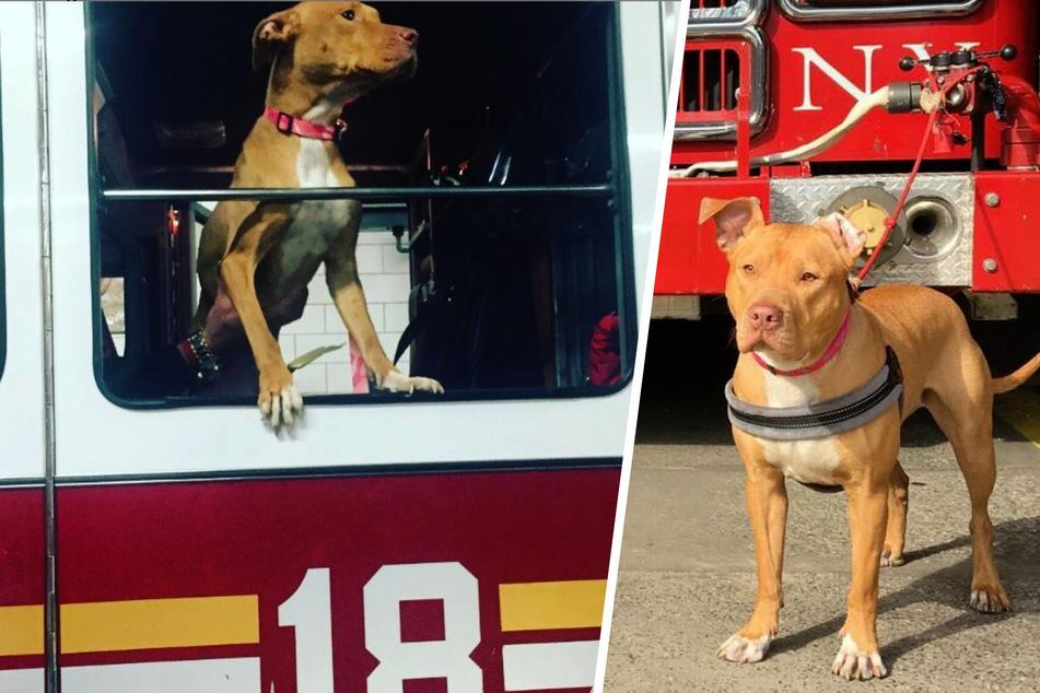 Mittlerweile hat sie im Feuerwehrauto sogar ihren ganz eigenen Platz ergattert!
