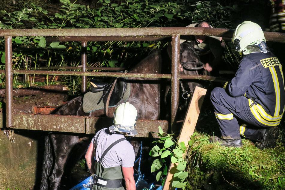 Das Pferd brach in einer Brücke im Bärengrund ein.