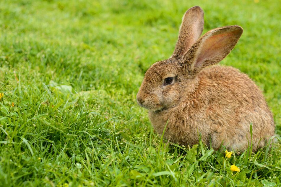 Kaninchen in Zoo-Gehege geworfen: Verdächtiger droht bis zu drei Jahren Knast!