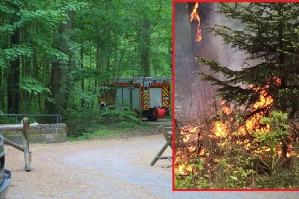 Waldbrand in Dresdner Heide ausgebrochen