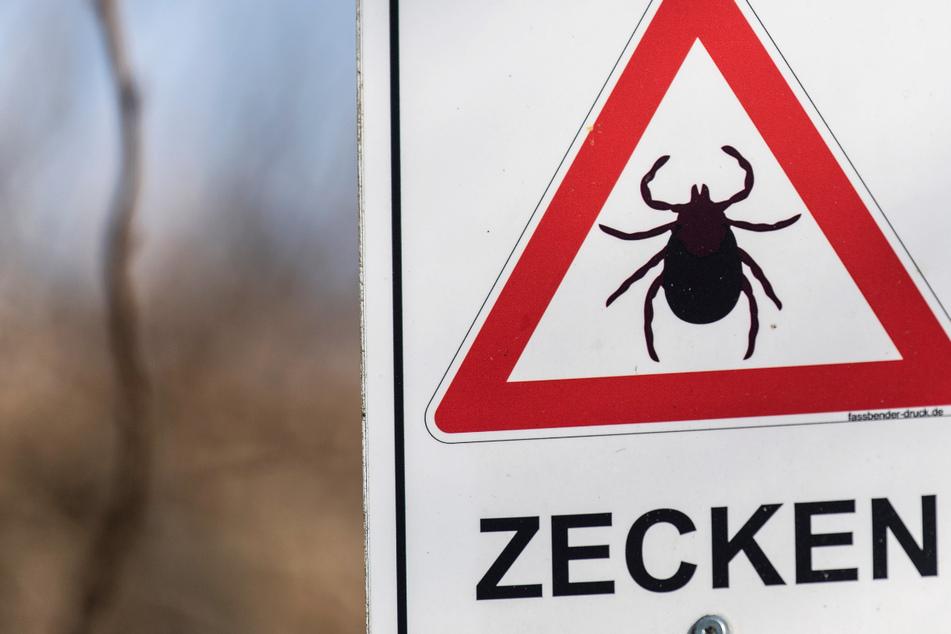 Hirnentzündung FSME durch Zecken-Biss: Landkreis Fulda neues Risikogebiet
