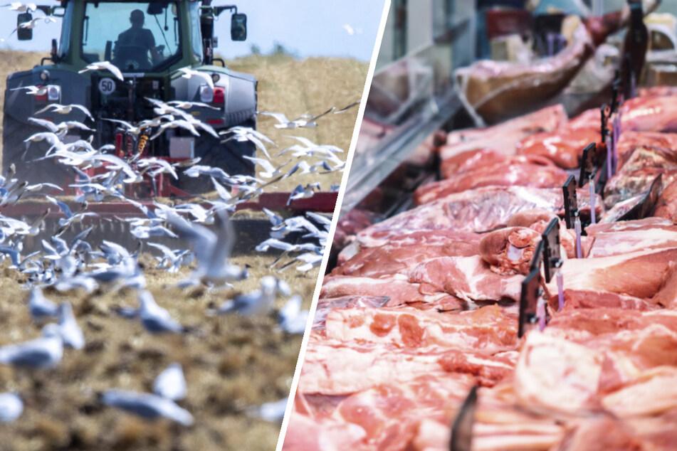 Fleisch bis zu 60 Prozent teurer! Das bewirken neue EU-Regeln für Bauern