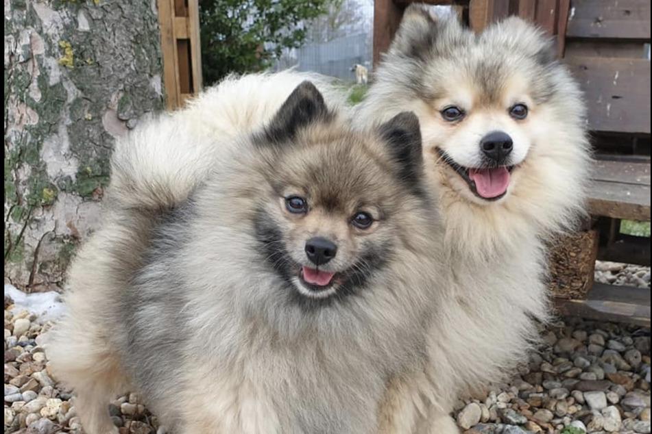 Susi und Strolch werden auf etwa 7 Jahre geschätzt.
