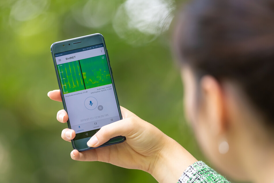"""Mit der App """"BirdNET"""" lassen sich über 3000 Vogelstimmen erkennen."""