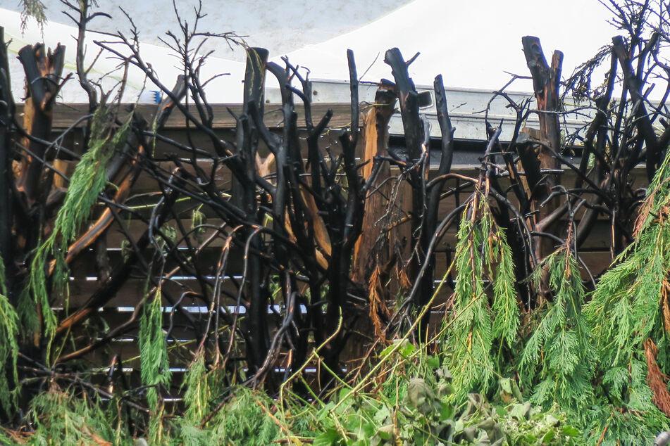 Die Feuerwehr löschte die brennende Hecke und verhinderte so Schlimmeres.
