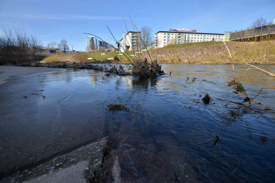 Hochwassergefahr durch Schneeschmelze? Aktueller Wasserstand der Chemnitz im Bereich zwischen Uferstrand und Falkeplatz.