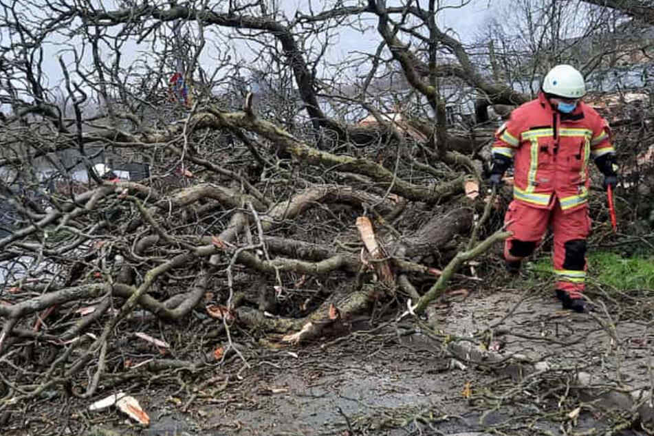 """Sturm """"Hermine"""" wütet in NRW: Feuerwehr vielerorts im Einsatz"""