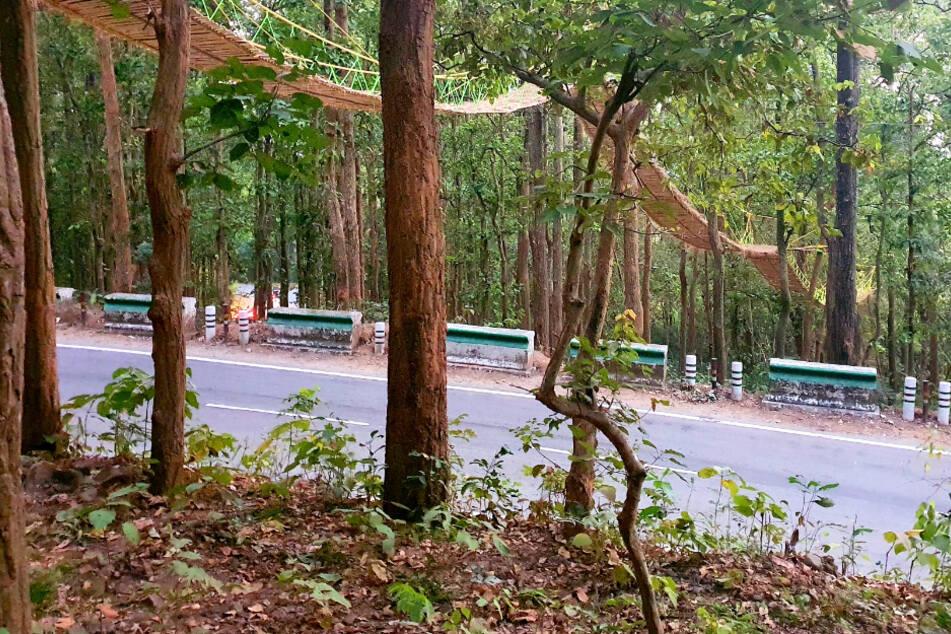 Kurioses Verkehrsprojekt: Diese Brücke wurde nur für Tiere gebaut