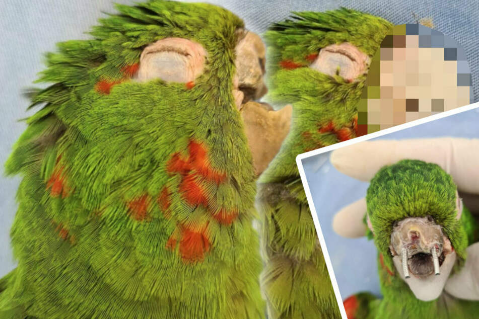 Vets save a badly injured parrot's life with a spectacular makeover!