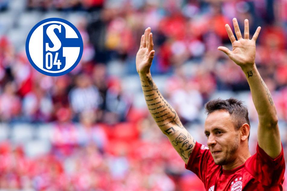 Der nächste Schalke-Hammer? S04 will auch Rafinha zurückholen!