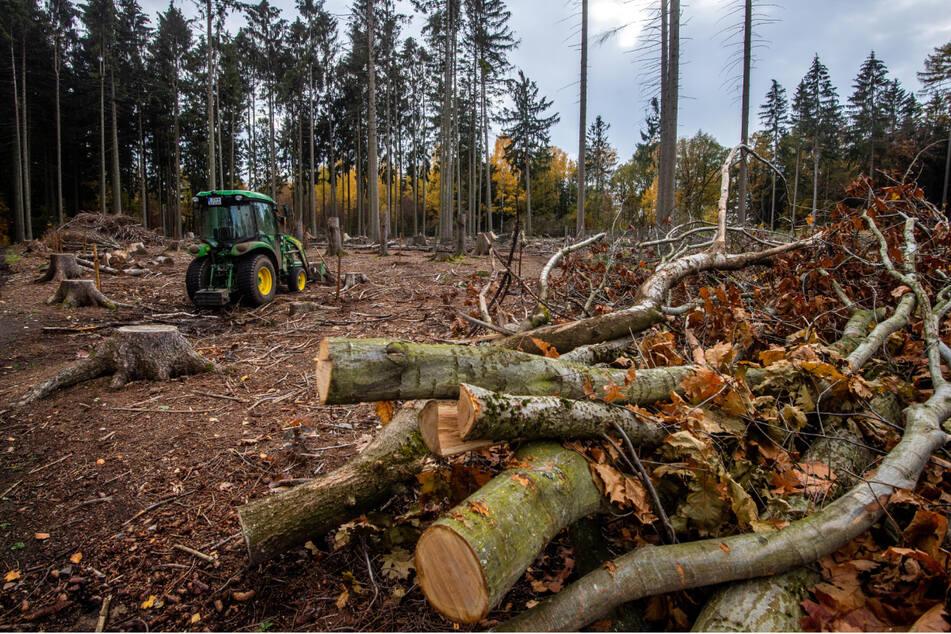 In Sachsens Wäldern gibt es immer wieder Einsätze wegen Bruchholzes.