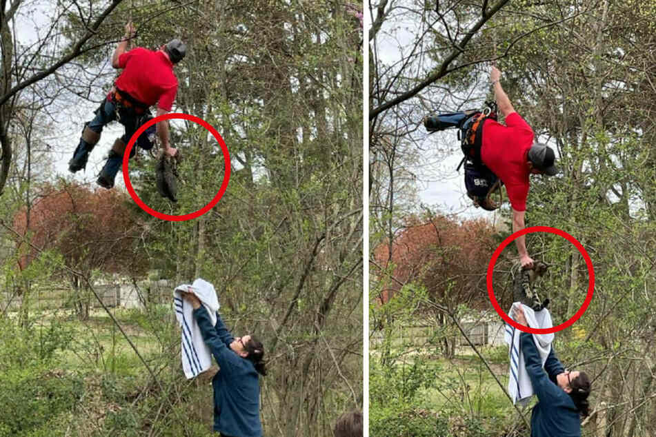 Cat stuck in tree for 18 days returns to earth in amazing rescue effort