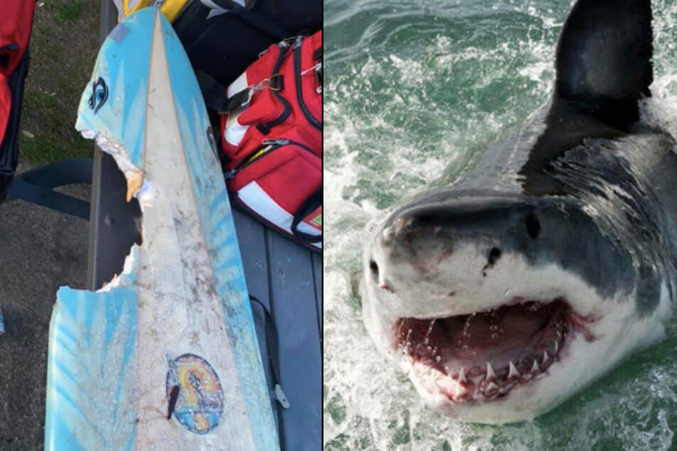 """""""Be careful out there"""": Shark attack leaves surfer seriously injured"""