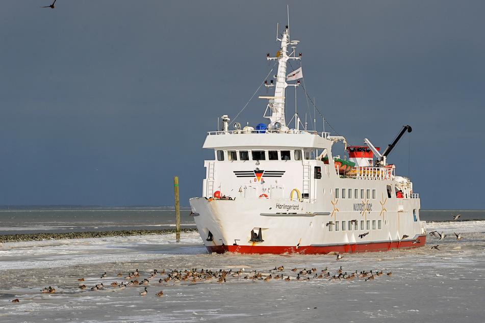 Eis und Niedrigwasser machen den Fähren zu schaffen.