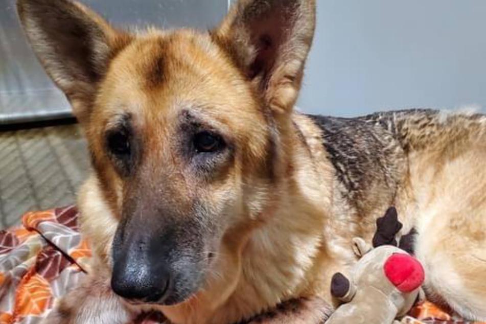 Frustrierter Hundeblick: Delilah sah todunglücklich aus, als man sie fand.