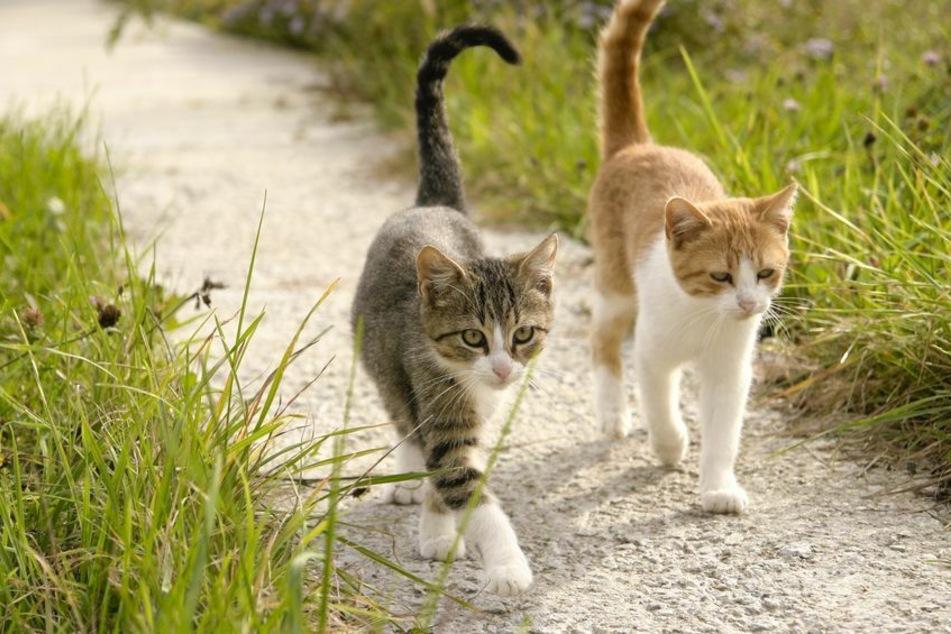 Die Polizei fand am Samstag zwei tote Katzen (Symbolbild).