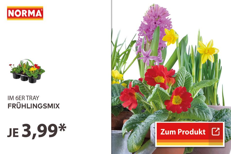 Frühlingsmix für 3,99 Euro.