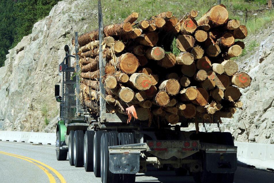 Tödlicher Unfall: 26-Jähriger wird unter Holztransporter begraben
