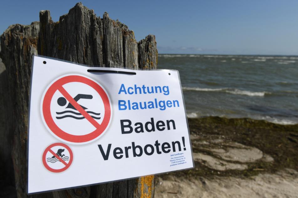 Dieser Strand in Wampen ist wegen Blaualgen gesperrt.