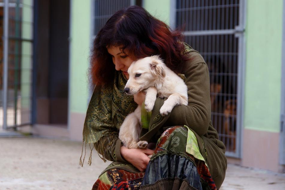 Die Tiere werden so gut es geht versorgt. Doch finanziell wird es immer enger. (Symbolbild)