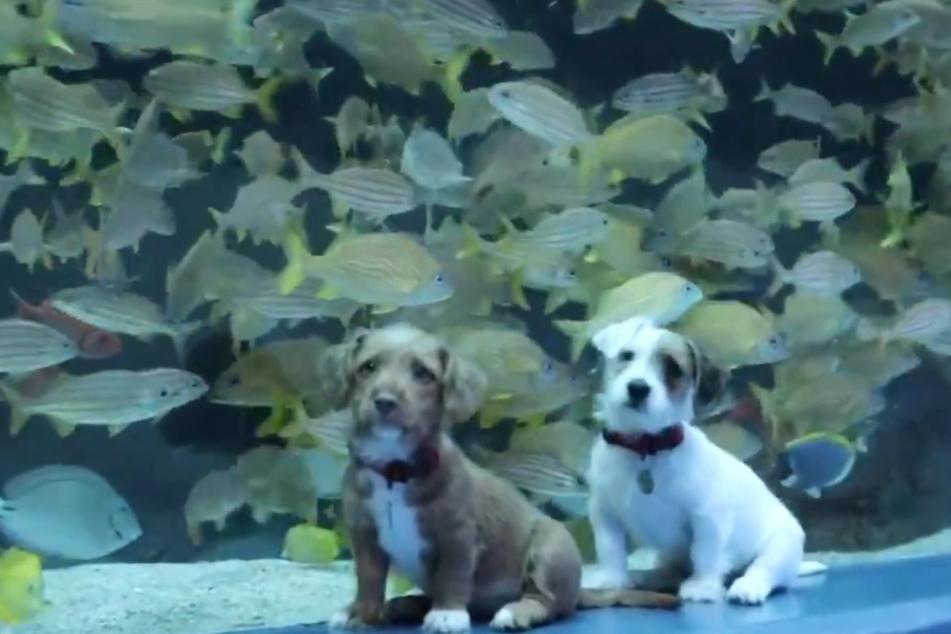 Die Fische schienen die Hunde nicht zu interessieren.
