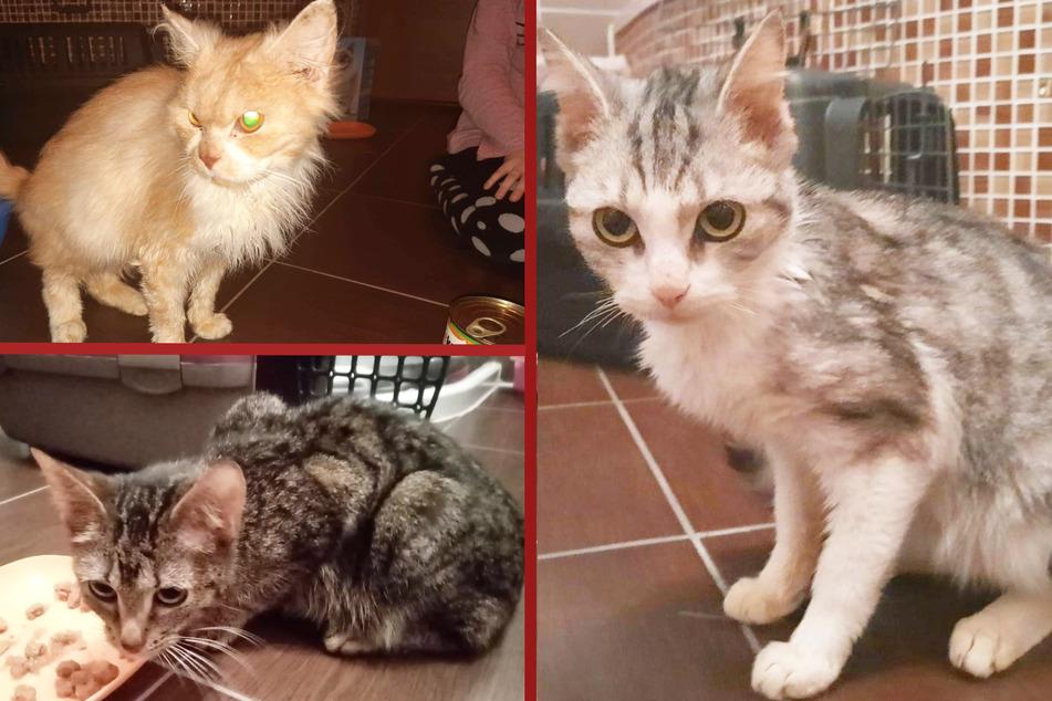 Nur noch Haut und Knochen: Misshandelte Kitten aus Zwangsräumung gerettet
