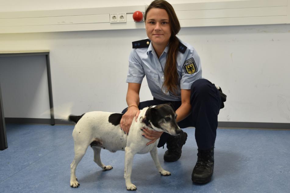 Eine Beamtin der Bundespolizei hält einen weiß-schwarz gefleckten Hund fest, der sich ohne Begleitung mit der Regionalbahn auf den Weg in die Großstadt Nürnberg gemacht hat.