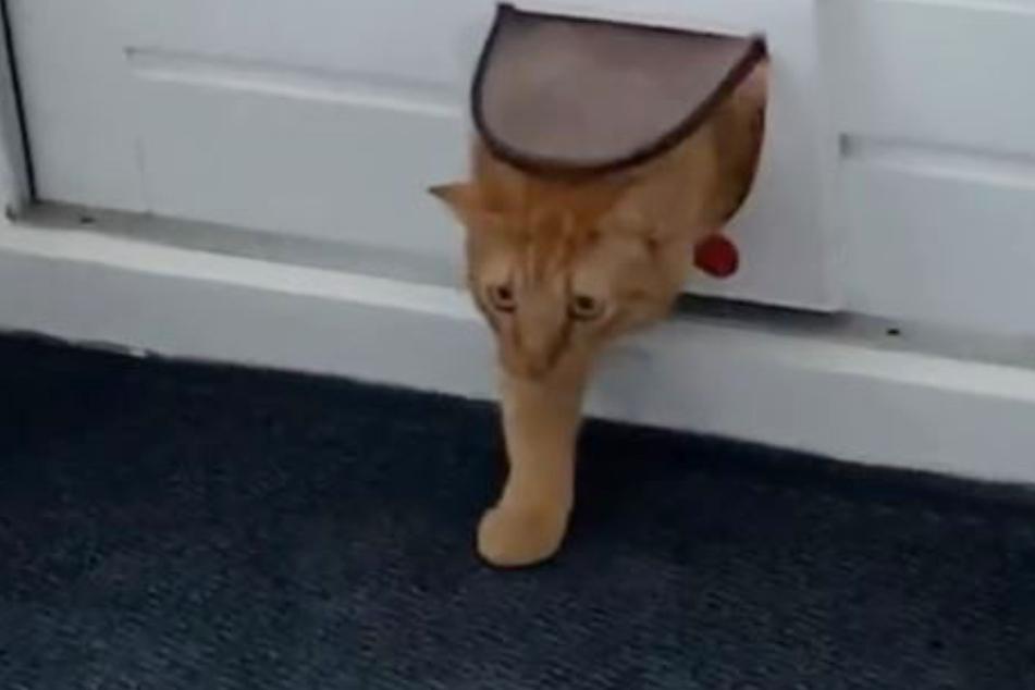 """""""Ich geh dann mal wieder."""" Die Katze ging ähnlich schnell wie sie gekommen war."""
