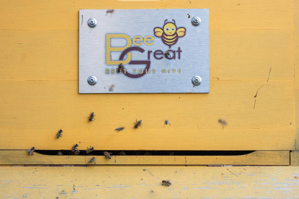 Das Logo der Bienenvermietung prangt auf einem Bienenstock.